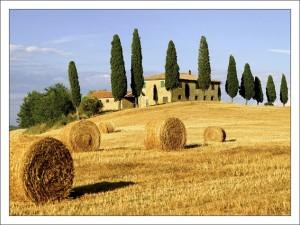 Природа Италии. Равнина. фото